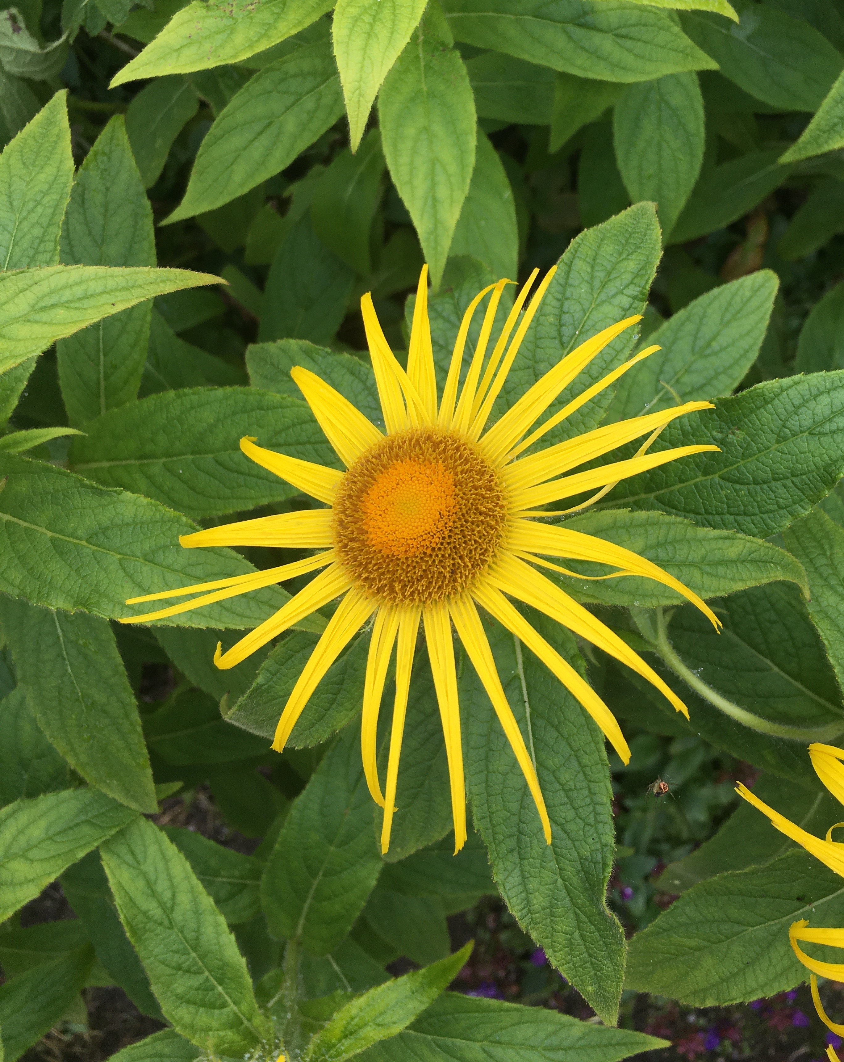 A yellow flower, symbolizing 'living according to nature' which is the goal of epicureanism.